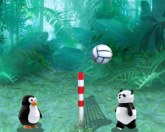 Зоо волейбол