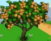 Сборка фруктов