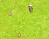 Свинки Ники