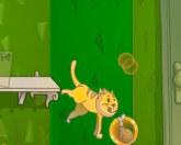 Кошка бегает по дому