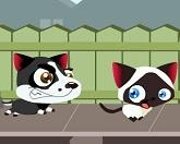 Беги котенок, беги