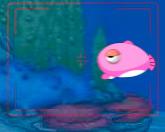 Дора - фото рыб