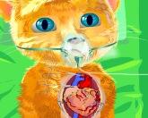 Операция на сердце Джинджер