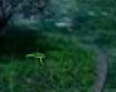Спрятавшиеся лягушки