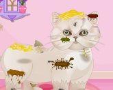 Грязный котяра