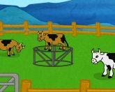Огромное ранчо